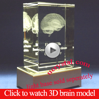 3D Human Brain Model Anatomy Neuroanatomy in crystal glass