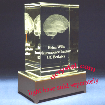 3D crystal brain model, large